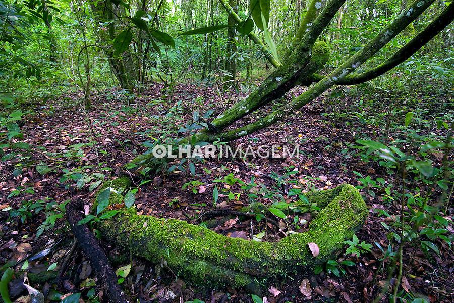 Vegetaçao de Floresta Atlantica. Curitiba. Parana. Foto de Zig Koch.
