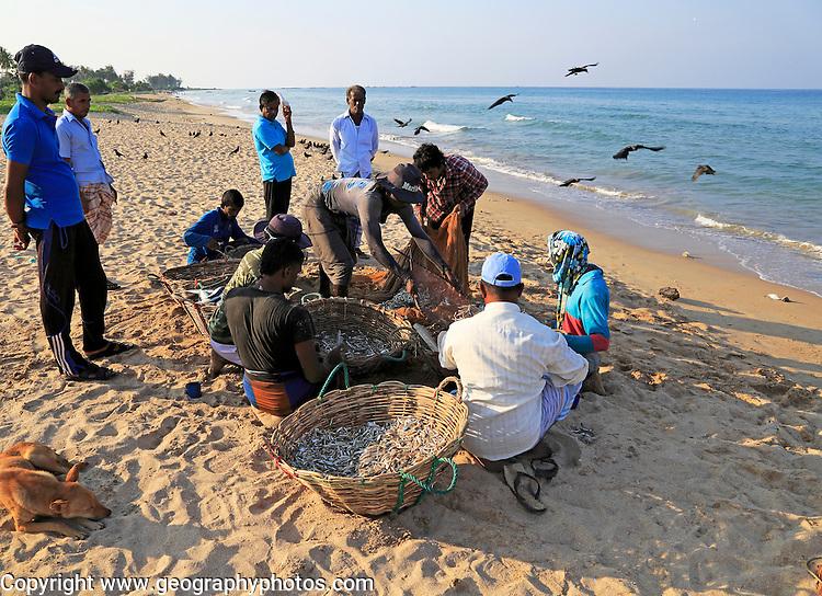 Traditional seine fishing hauling nets Nilavelli beach, near Trincomalee, Eastern province, Sri Lanka, Asia