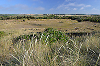 Coastal dunes and dune slacks at Holme Nature Reserve on the Norfolk coast