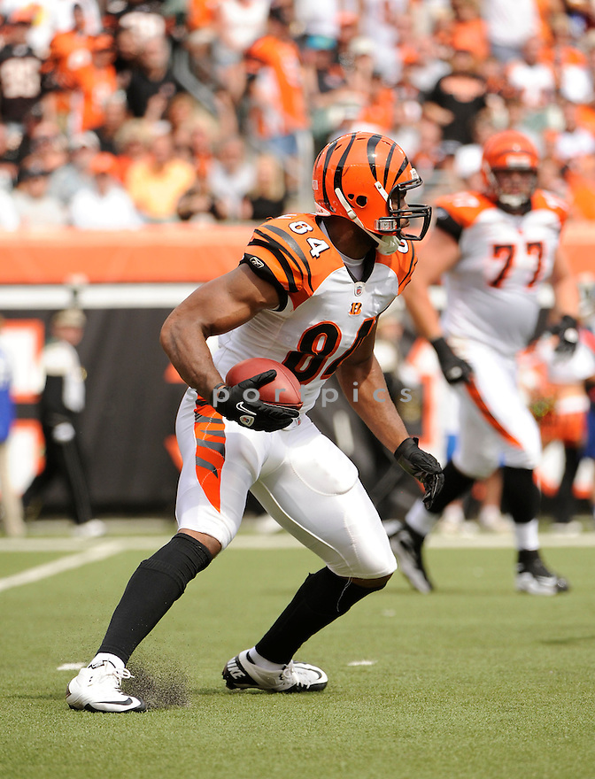 JERMAINE GRESHAM, of the Cincinnati Bengals  in action during the Bengals  game against the Baltimore Ravens on September 19, 2010 Paul Brown Stadium in Cincinnati, Ohio...The Bengals win 15-10