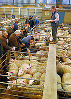 Clitheroe lamb show and sale.