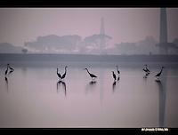 HSBC 2016 photo comp - wildlife