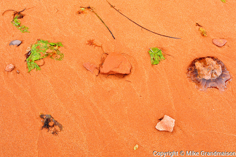 Seaweed, grass and rocks on red sand along the beach of the Gulf of St. Lawrence