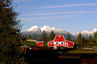 "Fraser Valley, Southwestern BC, British Columbia, Canada - Red Barn on Farm, Snow Capped ""Golden Ears"" Mountains (Coast Mountains) in Golden Ears Provincial Park, Spring"