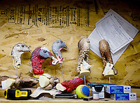 Turkey heads at Nick's Taxidermy in Superior, Nebraska, Thursday, December 1, 2011. ..Photo by Matt Nager