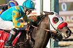 ARCADIA, CA  JANUARY 4:  #1 Desert Stone, ridden by Geovanni Franco, holds on to win the San Gabriel Stakes (Grade ll) on January 4, 2020 at Santa Anita Park in Arcadia, CA.  (Photo by Casey Phillips/Eclipse Sportswire/CSM)