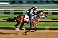 LOUISVILLE, KENTUCKY - MAY 01: Miss Sky Warrior, owned by Arlene's Sun Star Stable and trained by Kelly J. Breen, exercises in preparation for the Kentucky Oaksduring Kentucky Derby and Oaks preparations at Churchill Downs on May 1, 2017 in Louisville, Kentucky. (Photo by Scott Serio/Eclipse Sportswire/Getty Images)