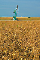 oil pump jack and  pea field<br /> Carlyle<br /> Saskatchewan<br /> Canada