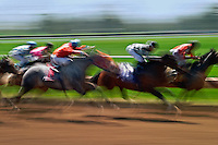 Blurred motion of thoroughbred horses