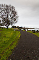 The paved path along San Leandro Bay in winter features bare trees and, thanks to recent rains, green grass under overcast skies.
