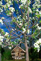 Log cabin birdhouse in blooming crabapple