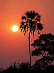 An African sunrise highlights the classic shape of a palm tree in Selinda, Botswana.