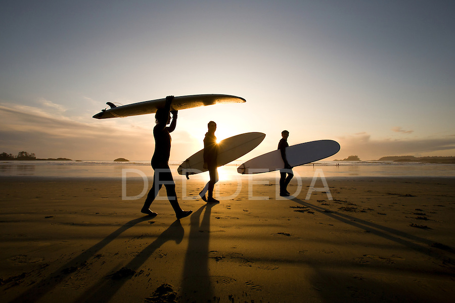 Three surfers walk along Chesterman's Beach with their surboards at sunset near Tofino, BC, on Vancouver Island, British Columbia, Canada.