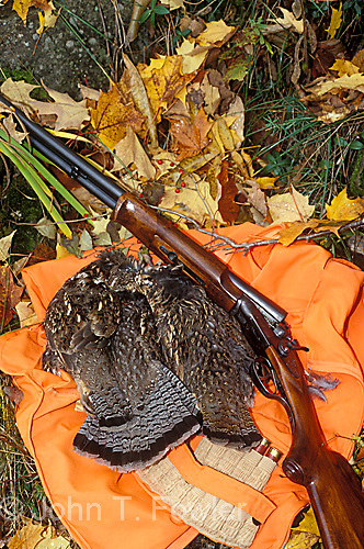 Ruffed grouse game birds with classic side by side shotgun