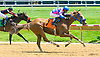 Turning The Table winning at Delaware Park on 6/29/17