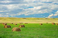 Alfalfa bales<br /> Neidpath<br /> Saskatchewan<br /> Canada