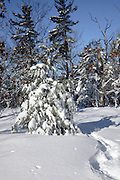 Snowshoe tracks at Pawtuckaway State Park during the winter months Located in Nottingham, New Hampshire USA, which is part of New England