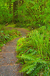 Olympic National Park, WA     <br /> The Hall of Mosses trail