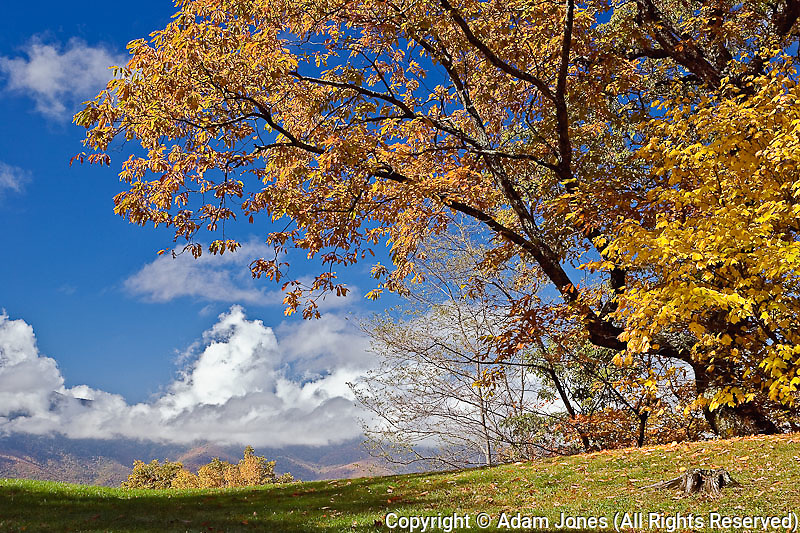 Single tree and distant southern Appalachian Mountains in fall, North Carolina