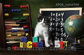Xavier, ANIMALS, cats, photos+++++,SPCHCATS744,#a# Katzen, gatos
