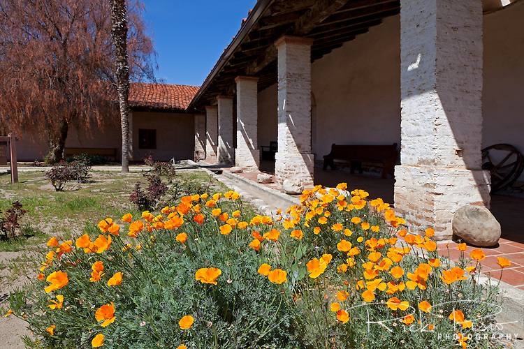 """California poppies bloom on the patio at Mission San Antonio de Padua. Mission San Antonio de Padua sits within the """"Valley of the Oaks"""" in Monterey County near the town of Jolon. The mission was founded on July 14, 1771 by Father Junipero Serra and was the third mission in Alta California. Mission San Antonio de Padua is located on eighty pristine acres on what was once the Milpitas Unit of the Hearst Ranch and is today surrounded by the Army's Fort Hunter Ligget Military Reservation."""