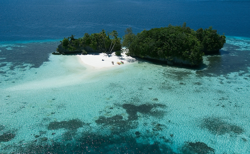 Tree Coconut Island Palau