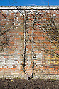 """Pear 'Seckle' trained into a double (""""U"""") cordon form, West Dean Gardens, Sussex, early March."""