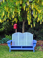 Bench and golden chain tree. Oregon