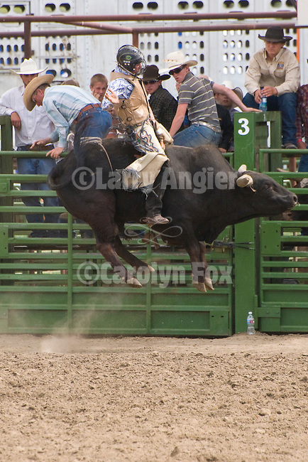 A bull rider in the air at the Jordan Valley Big Loop Rodeo, Ore.