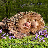 CHIARA,REALISTIC ANIMALS, REALISTISCHE TIERE, ANIMALES REALISTICOS, paintings+++++,USLGCHI579,#A#, EVERYDAY ,photos