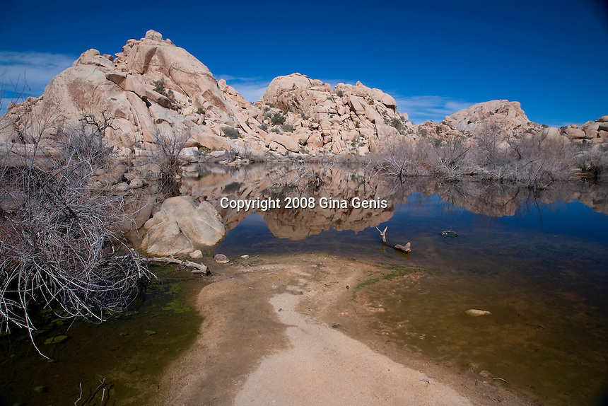 Horizontal view of Barker Dam in Joshua Tree National Park with water from recent rains.