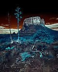 Courthouse Butte with Agaves (Infrared) ©2017 James D Peterson.  Seen from the Rabbit Ears Trail, this Sedona landmark is bathed in ethereal morning light beaming through broken clouds.  Castle Rock and the Black Hills can also be seen in the distance.