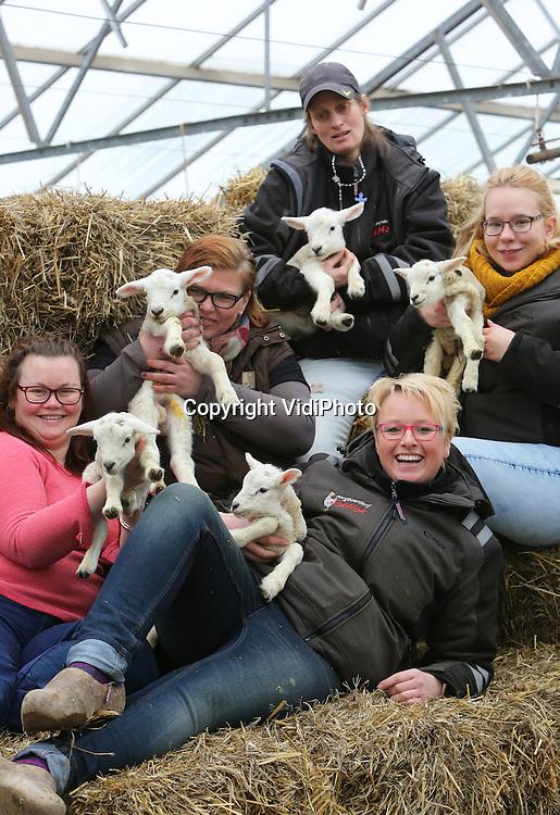 Foto: VidiPhoto<br /> <br /> ARNHEM - Vijf cli&euml;nten van zorgboerderij TokHok in Arnhem tonen dinsdag trots de zojuist geboren vijfling bij moeder Toppertje. Allemaal jongetjes. Hoewel een vijfling bij schapen niet uniek is, komt het slechts enkele malen per jaar voor. Voor TopHok is het zelfs de eerste keer in het bestaan van de zorgboerderij. In het voormalige tuincentrum in de Arnhemse wijk Geitenkamp worden diverse dieren gehouden, maar de schapenhouderij is het belangrijkste onderdeel. Inmiddels zijn er zeventien lammetjes geboren en er worden er in totaal tussen de 60-90 verwacht. Voor eigenaar Esther van Kemp (rechts onder) is het dan ook een drukke tijd met veel slaaptekort. Bedoeling is dat de lammetjes uiteindelijk in pan terecht komen. Lamsvlees is een van de streekproducten waarmee TopHok bovenregionale bekendheid heeft. Vanwege strenge Q-koorts-maatregelen mogen er tot lammetjesdag 17 maart geen andere gasten bij de lammetjes dan alleen de verzorgers.