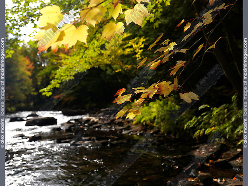 Oxtongue river. Beautiful fall nature scenery. Algonquin, Muskoka, Ontario, Canada.