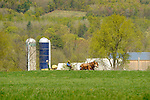Nippenose Valley, PA. farmscape in spring with Amishman planting corn with mule team.