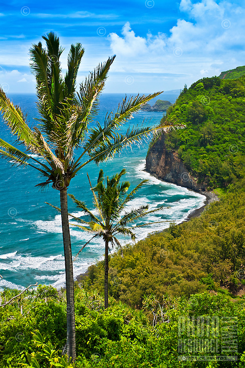 Coconut palm trees and Pololu Beach, Pololu Valley, North Kohala, Big Island.