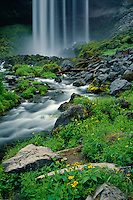 Streambank arnica<br /> Tamanawas Falls<br /> Mt. Hood National Forest<br /> Cascade Range, Oregon