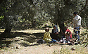 A PIECE OF JORDAN - TRAVEL FEATURE.LUNCH WITH THE TWASSI FAMILY IN THEIR ANCIENT OLIVE GROVE. PHOTO BY CLARE KENDALL. 07971 477316.