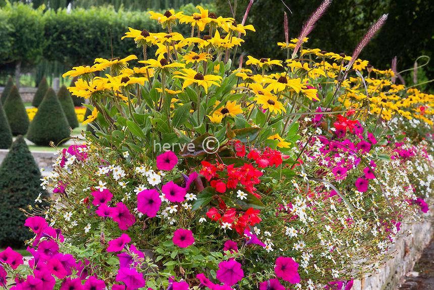 Flower box with Rudbeckia, Petunia, Bidens