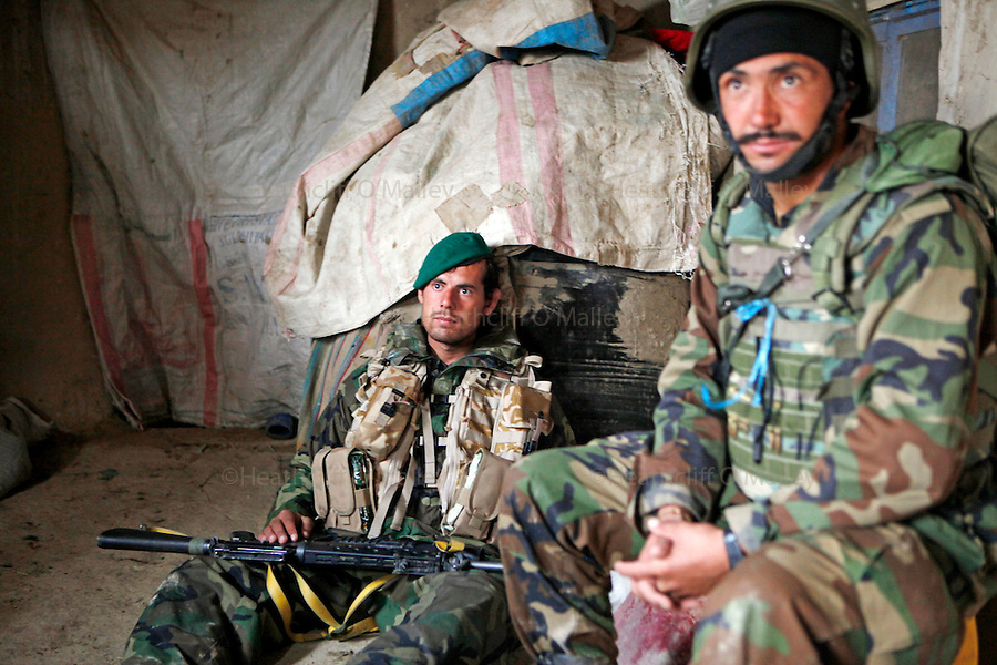 """Mcc0018931 . Daily Telegraph..Afghan soldiers working alongside No3 Coy, Coldstream Guards durIng operation """"Leopard's Strike"""", a show of force in the Taliban stronghold of Torghai in the Babaji area of Helmand province. It was the first time the Company, commanded by Major James Thurstan(pictured giving orders ), had been into the area and although the Taliban attempted to set an ambush they were out manouvered and the day passed peacefully...Afghanistan 10 November 09."""
