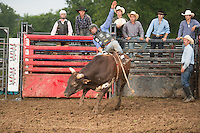 SEBRA - Jane Lew, WV - 7.19.2014 - Bulls & Action