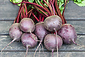 Freshly harvested 'Action' beetroot.