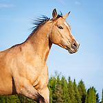 20160620 Martha Horse