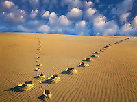 Footprints up sand dune. Oregon Dunes National Recreational Area.