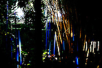 "Cobalt Reeds, 2006 by Dale Chihuly. ""Glass in the Garden,"" Missouri Botanical Garden."
