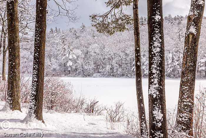 Paradise Pond in Leominster State Forest in Leominster, MA, USA
