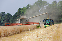 Harvesting winter barley - Norfolk, July