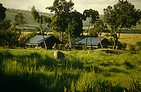 An elephant wanders through the long grass with a safari lodge beyond
