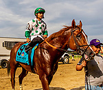 JULY 06, 2019 :  Promises Fulfilled with Luis Saez, wins the John A. Nerud Stakes, at 7 furlongs at Belmont Park, in Elmont, NY, July 6, 2019.  Sue Kawczynski_ESW_CSM