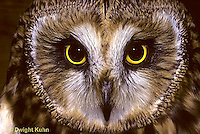 OW05-086c   Short-eared Owl - close-up of face -  Asio flammeus